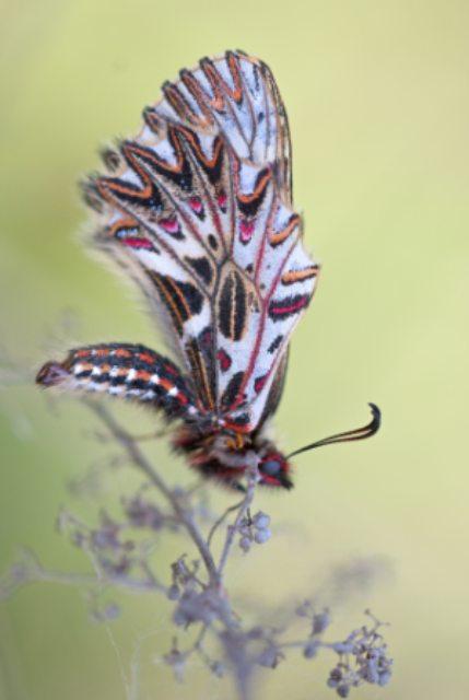 bug-bunt-farbenfroh-60353